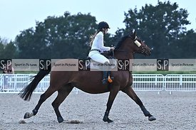 Stapleford Abbotts. United Kingdom. 12 August 2020. Wednesday night unaffiliated showjumping. MANDATORY Credit Garry Bowden/S...