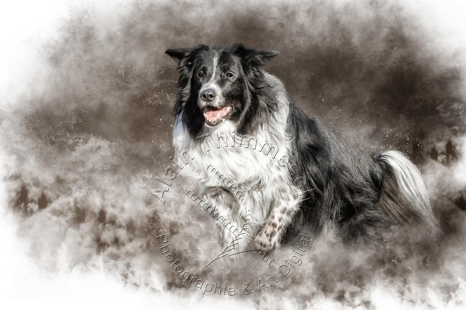 Art-Digital-Alain-Thimmesch-Chien-977