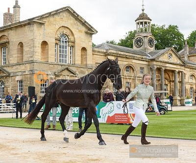 Libby Seed and PHILANDERER II at the trot up, Equitrek Bramham Horse Trials 2019