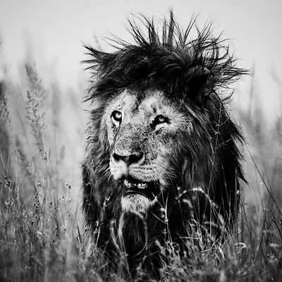 ion_as_a_rock_star_Tanzania_2018_Laurent_Baheux