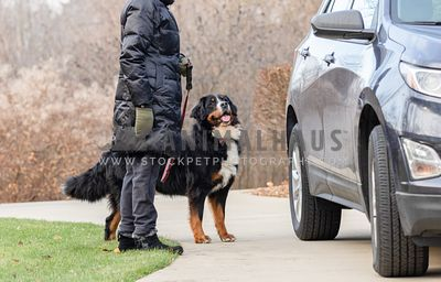 A woman in a winter coat holds a Bernese Mountain Dog near an SUV