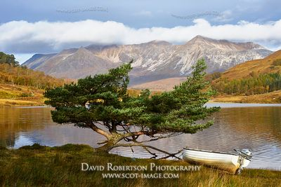 Image - Small boat and Scots Pine Tree on the shore of Loch Coulin, Torridon, Wester Ross, Highland, Scotland.  View to Beinn...