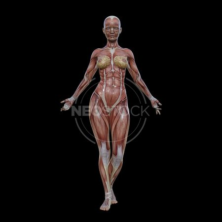 cg-body-pack-female-muscle-map-neostock-1