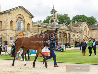 Will Rawlin and V.I.P VINNIE at the trot up, Equitrek Bramham Horse Trials 2019