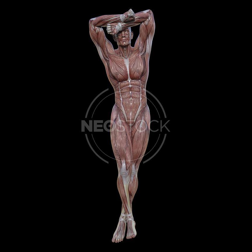 cg-body-pack-male-muscle-map-neostock-31