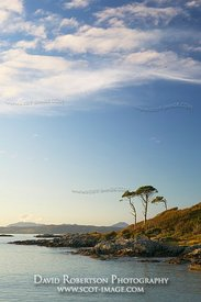 Image - Coast and trees near Arisaig, Morar, Scotland