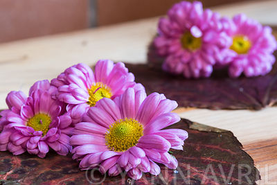 Cut flowers on a wooden table : Chrysanthemum .