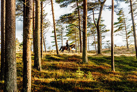 Woman riding horse in Thy, Denmark 33