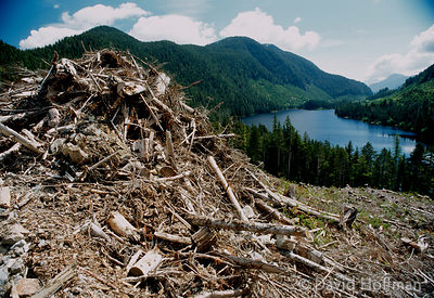 Clearcutting forest on Vancouver Island by Interfor, a very large logging company.