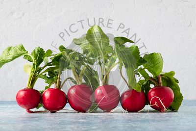 Six radishes lined up in a straight row.