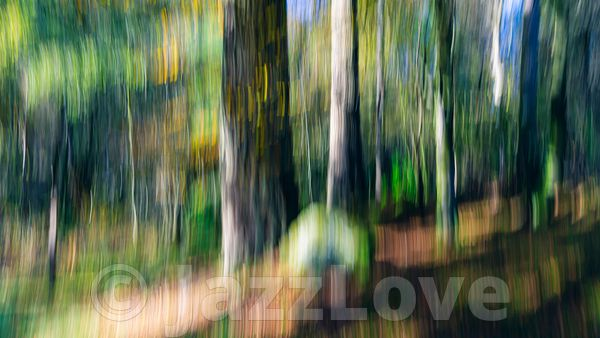Trees in woodland.ICM nature abstract.