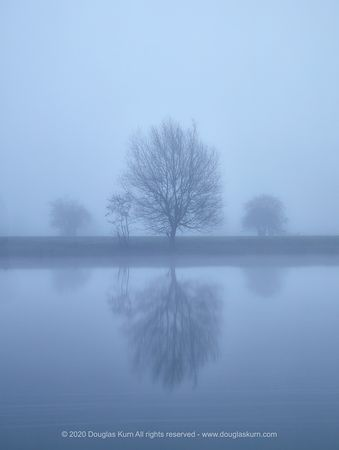 Limited edition Giclée fine art print of Trees on the River Thames near Chertsey Bridge.