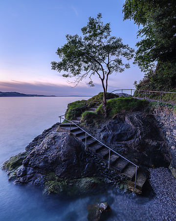 Twilight_tree_-_Babbacombe