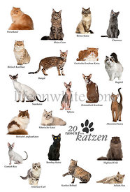 Cat breeds poster in German