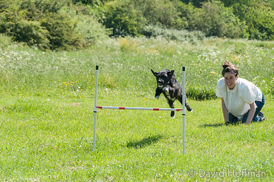 Lydia Burke's dog training class in Spring Hill, London.