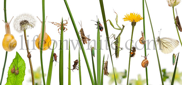 Pastoral composition of flowers and insects in front of white background