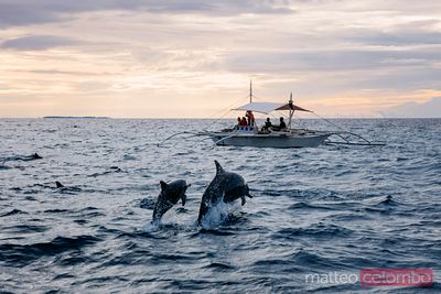 Dolphin watching with dolphin jumping out of water, Philippines
