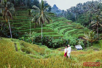 Adult couple visiting Tegalallang rice terraces, Bali