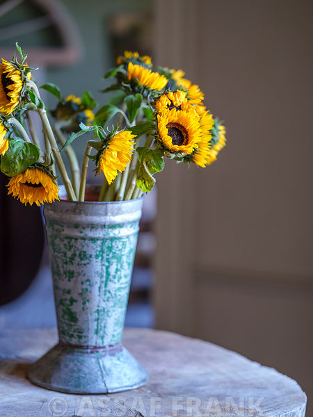 Bunch of Sunflowers in a vase
