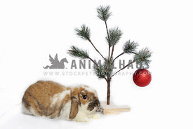 Bunny with christmas tree
