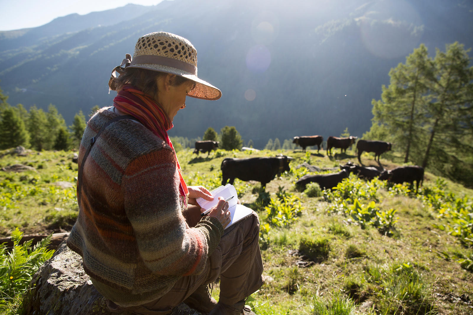 Shepherdess noting in a notebook the cows which win the struggles in order to know who will be the queen at the end of the pa...