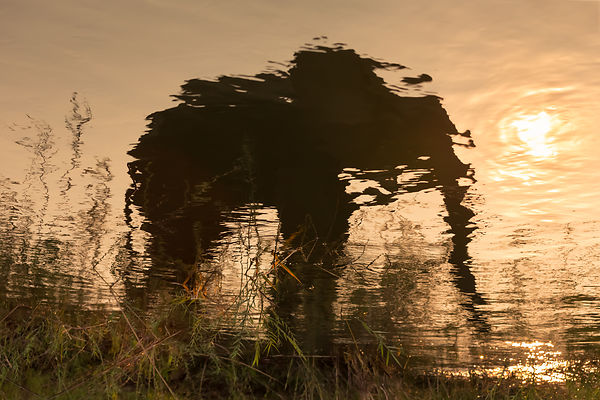 Elephantiflection