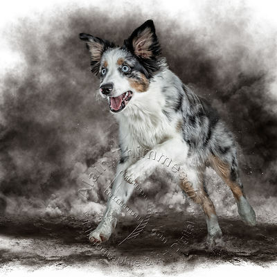 Art-Digital-Alain-Thimmesch-Chien-979