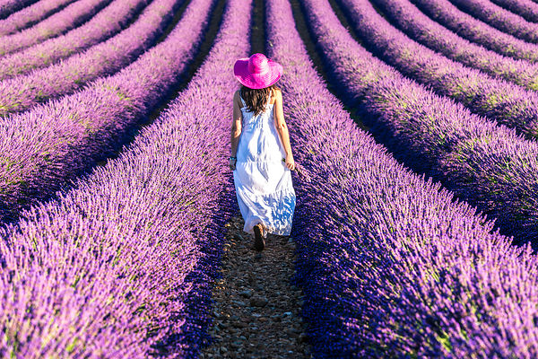 In the Lavender