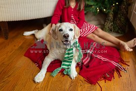 Young girl sitting on a red blanket with a dog at Christmas