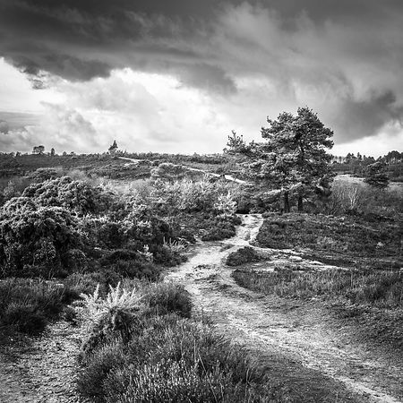 Dark clouds over the New Forest National Park