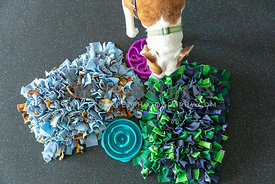 A dog checking out a snuffle mat