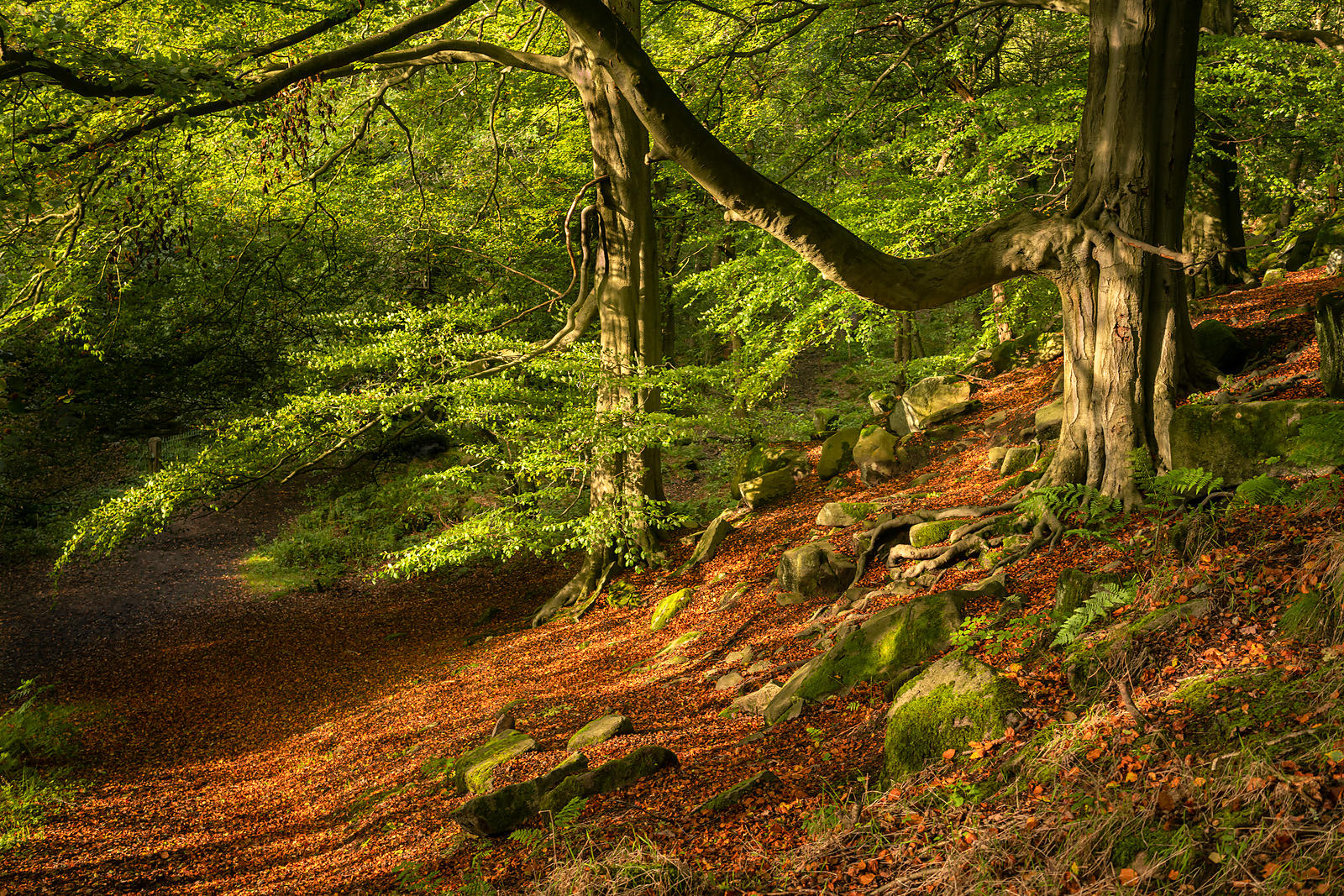 Early autumn afternoon in Padley Wood