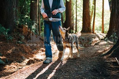 An obedient kelpie heeling with owner on a forest path
