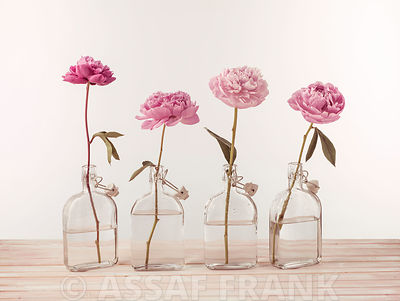 Peonies in glass bottles