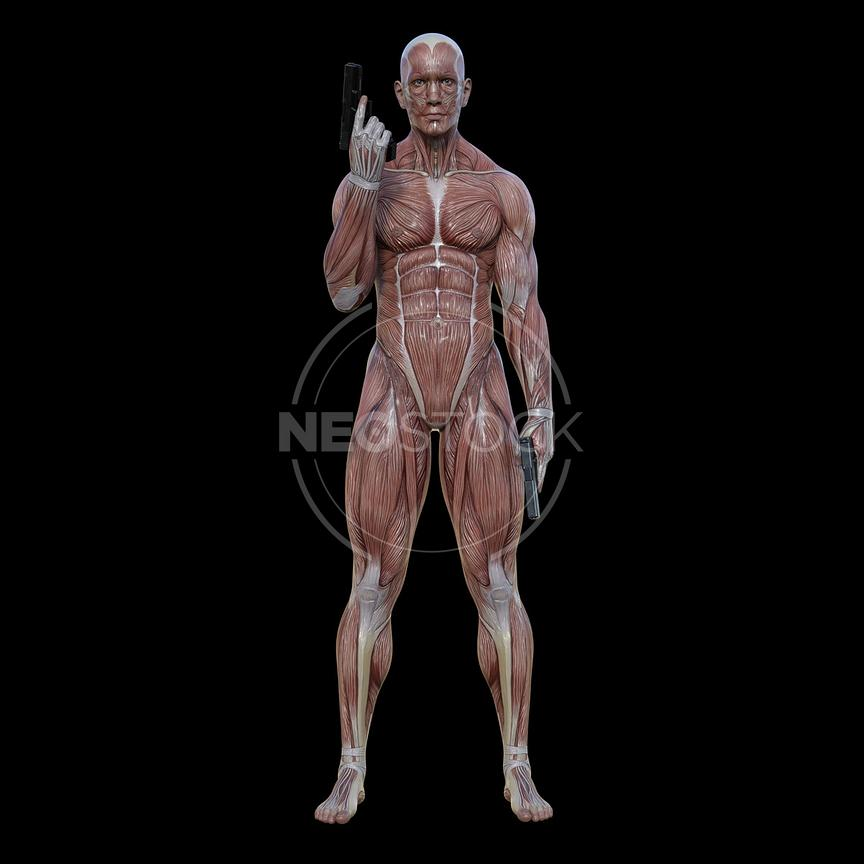 cg-body-pack-male-muscle-map-neostock-13