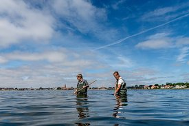 Women net-fishing in Limfjorden, Denmark 2