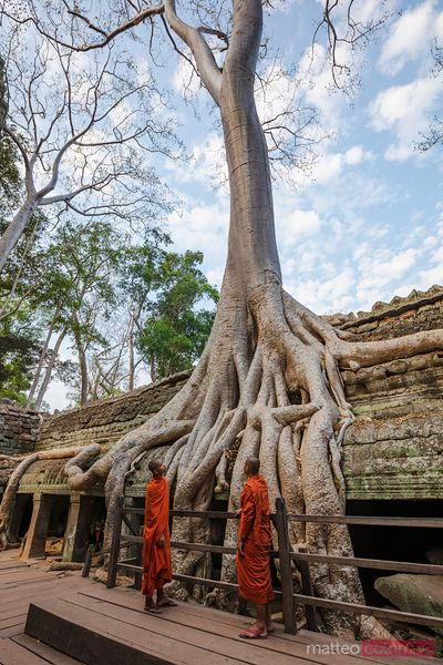 Monks under big tree in the old ruins of Angkor, Cambodia