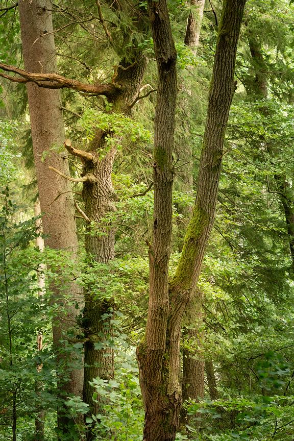 Living trees intimacy and embrace