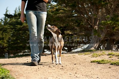 Dog walking next to owner on path
