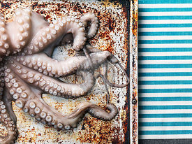 Raw octopus on baking sheet background, top view