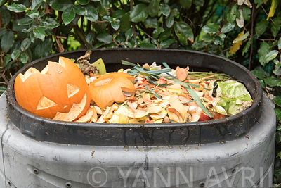 Citrouille d'Halloween destinée au compost  ∞ Halloween pumpkin set on a compost heap