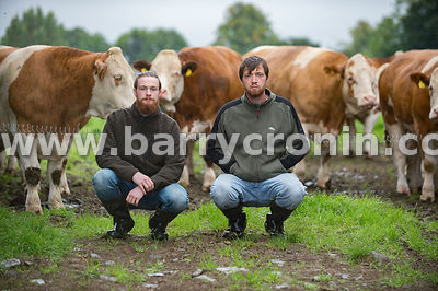 18th September, 2016.David (l) and James Wall on their family farm in Newcastle, County Dublin with Simmentals . Photo:Barry ...