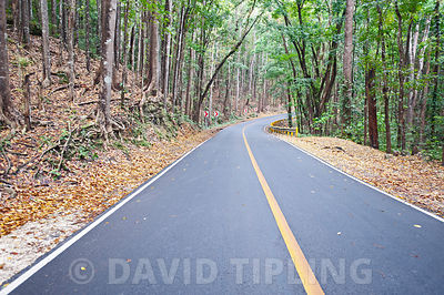 Forest road on Bohol, Philippines
