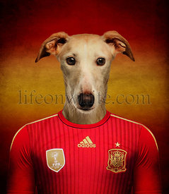 Spanish Galgo wearing a Spanish football jersey with the colors of the flag in the background