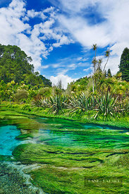 River landscape at Blue Spring - Oceania, New Zealand, North Island, Waikato, South Waikato, Putaruru, Blue Spring (Polynesia...