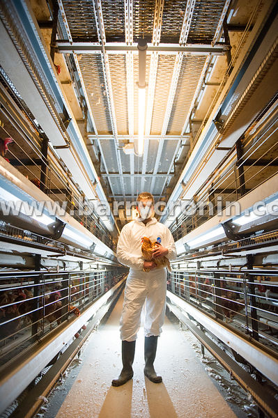 29th December 2015.Richard McGuinness of Duleek Poultry Enterprises, Ardee,County Louth.Photo:Barry Cronin/www.barrycronin.co...