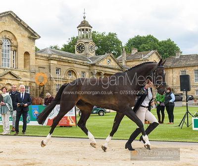 Mollie Summerland and CHARLY VAN TER HEIDEN at the trot up, Equitrek Bramham Horse Trials 2019