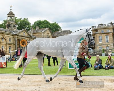 Kitty King and VENDREDI BIATS at the trot up, Equitrek Bramham Horse Trials 2019