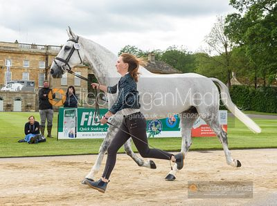 Susie Berry and STONEDGE at the trot up, Equitrek Bramham Horse Trials 2019