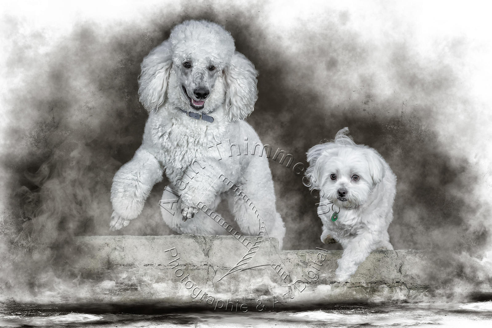 2020-Art-Digital-Alain-Thimmesch-Chien-8